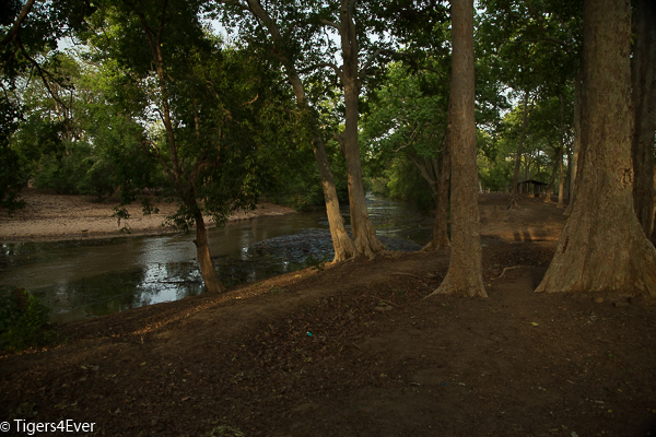 A River flows through the Jungle in Bandhavgarh National Park