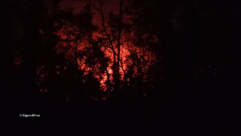 Forest fires glowing at night as trees in the Bandhavgarh Tiger Reserve burn intensely